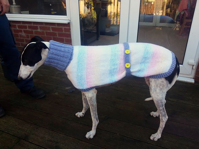 abandoned-greyhounds-christmas-sweaters-knitted-with-love-jan-brown-7